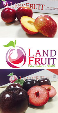 Landfruit (Sol de Valdivia) Tercera